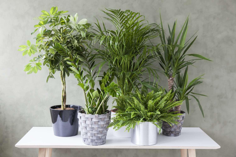 Grønneplanter